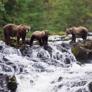 Exploring Alaska's Coastal Wilderness