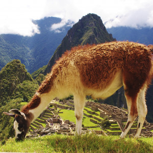 Flavours of Peru – Culinary Tour