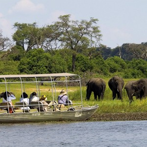 Chobe River Safaris
