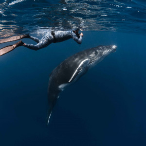 Dive & Swim with Whales Niue