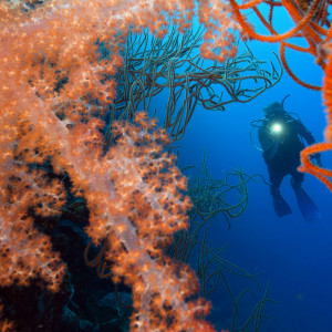 Dive Munda | Solomon Islands