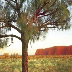 Alice Springs to Uluru Discovery