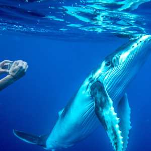 Dive & Swim with Whales Vavau | Tonga