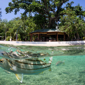 Fish Vanuatu | Luxury Fishing Lodge