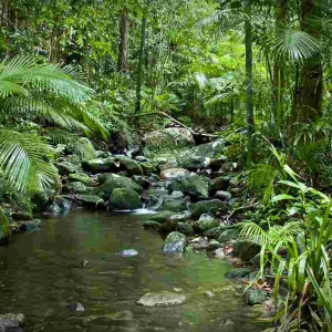 Daintree Adventure