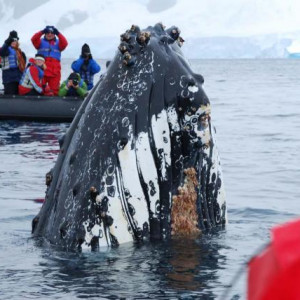 Antarctic Whale Journey