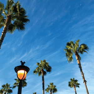 Discover Anaheim with Air New Zealand